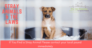 Stray Animal Laws