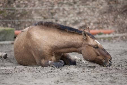 Equine Emergencies. Are You Prepared?