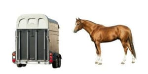 Equine Emergency Care