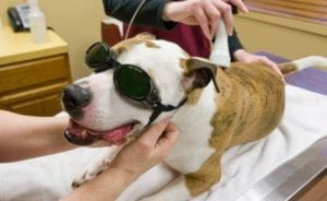 Laser Therapy fr Dog Arthritis