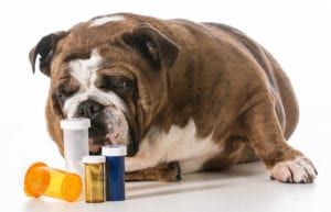 Pet Medications online