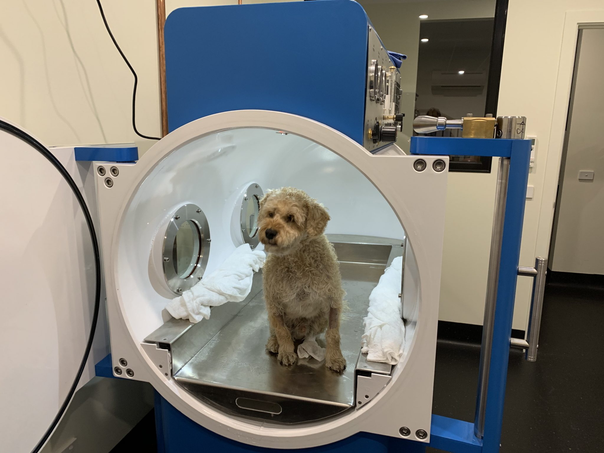 Hyperbaric Therapy For Pets