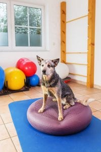 Musculoskeletal Consultations for Dogs