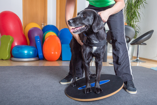Musculo-skeletal Consultations for dogs