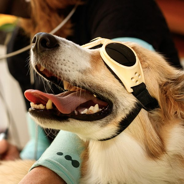 Laser Therapy for Dogs and Cats in Whittlesea, Victoria