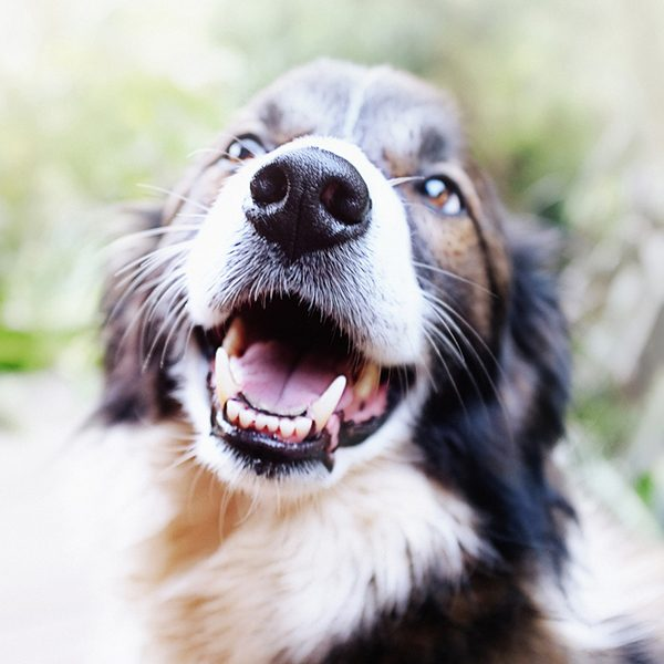Cat and dog teeth cleaning in Whittlesea, Victoria