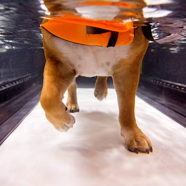 dog in therapy water